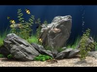Dream Aquarium图1