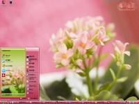 粉色长寿花桌面主题图1