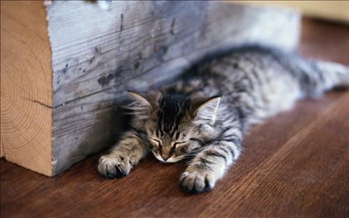 Sleepy Kittens图1